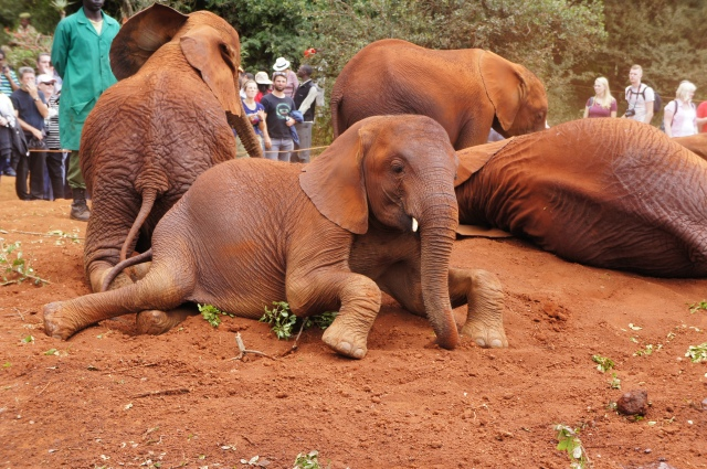 Elephant Orphanage, Kenya | Close Encounters of the Cooking Kind