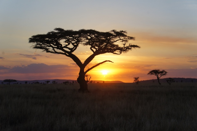 Serengeti Sunset, Tanzania | Close Encounters of the Cooking Kind