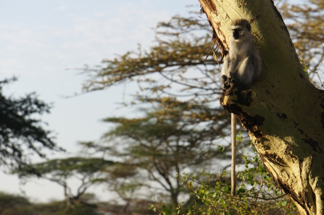Monkey, Serengeti National Park, Tanzania | Close Encounters of the Cooking Kind