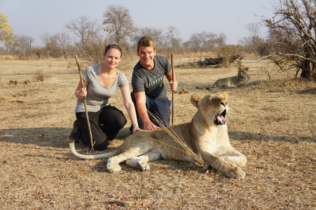 Lion Encounter, Livingstone, Zambia | Close Encounters of the Cooking Kind