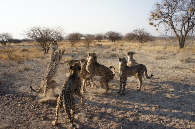 Cheetah Park, Namibia | Close Encounters of the Cooking Kind