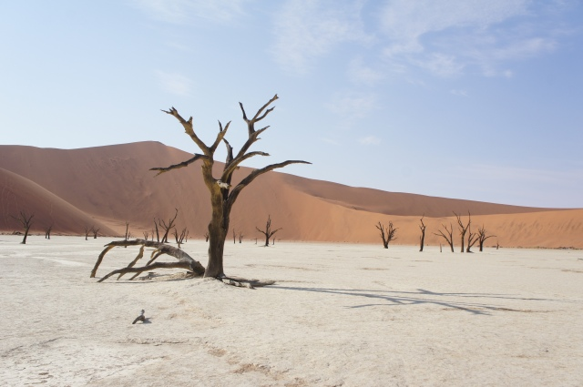 Deadvlei, Namibia | Close Encounters of the Cooking Kind